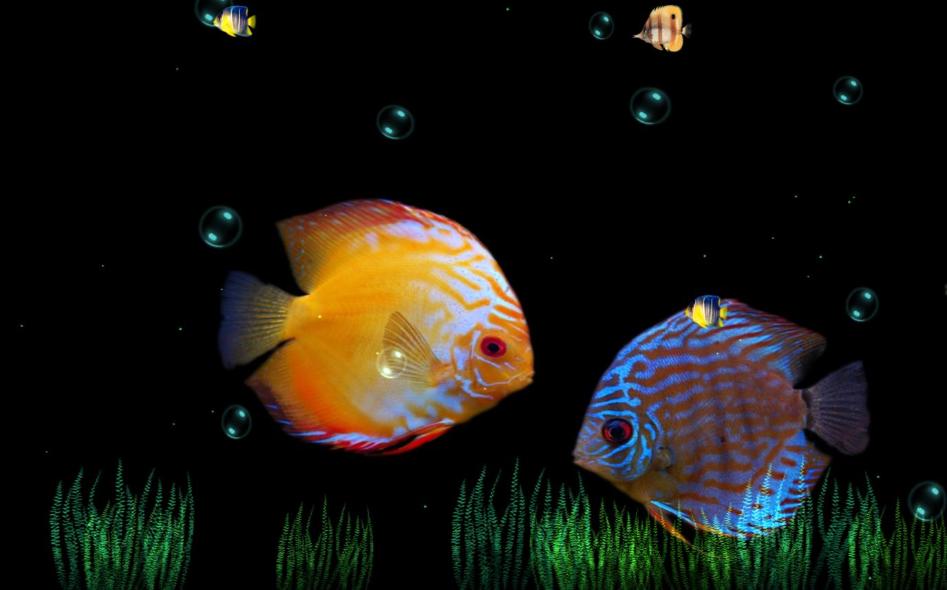 Love Animated Wallpaper For Desktop : Free Aquarium Screensavers HD: Beauty Of Ocean Screensaver ...