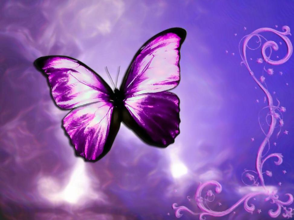 Fantastic Butterfly Screensaver - Animated Wallpaper