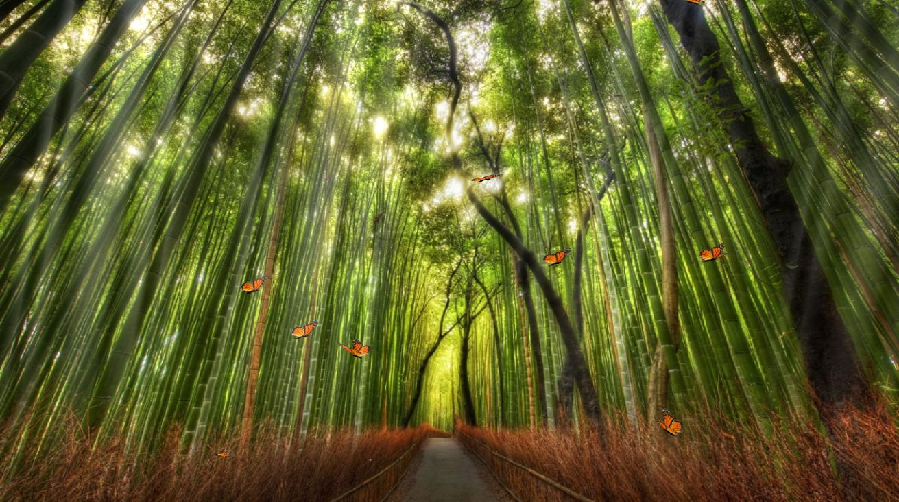 Click to view Beautiful Bamboo Forest Screensaver 1.0 screenshot