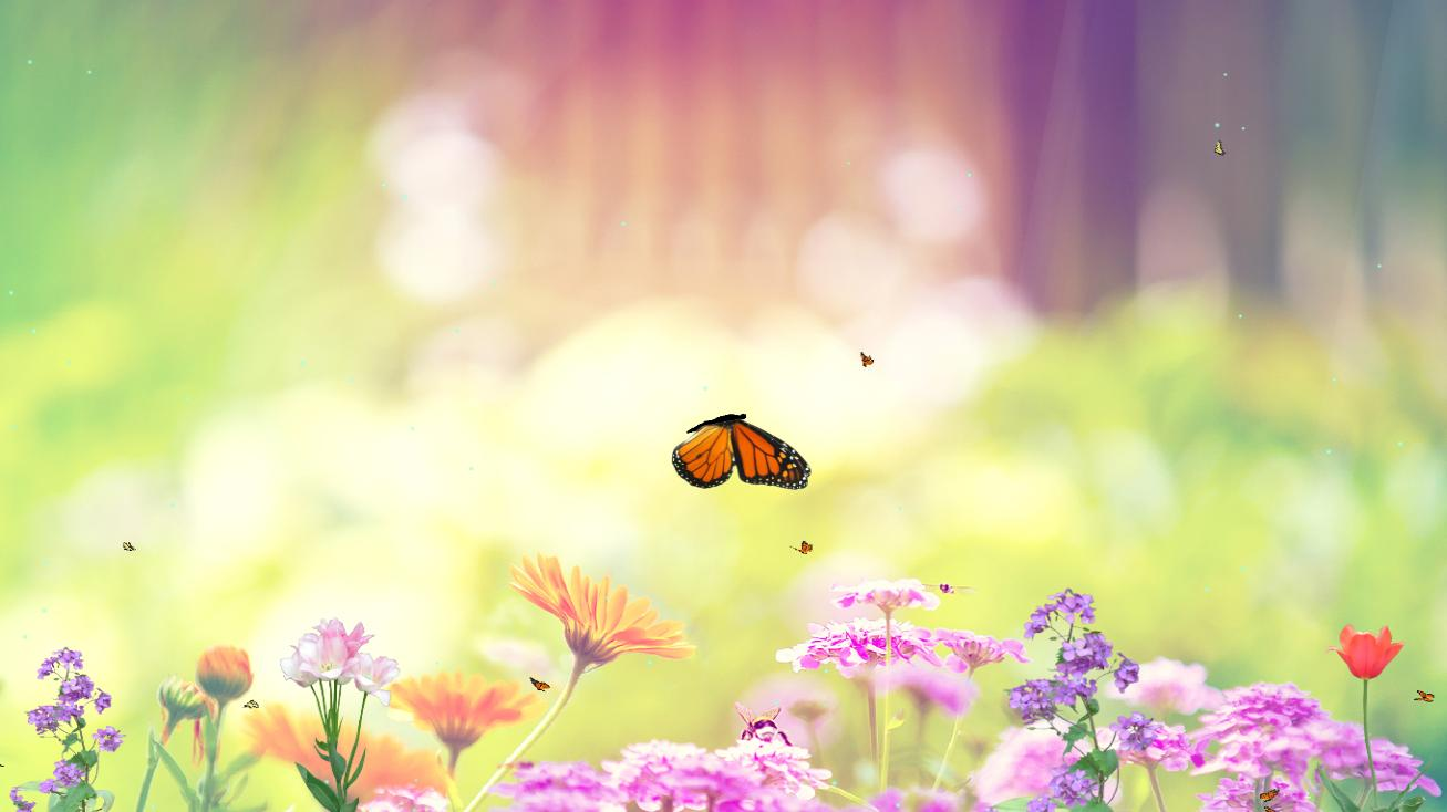 Butterfly Paradise Screensaver 1.0 full