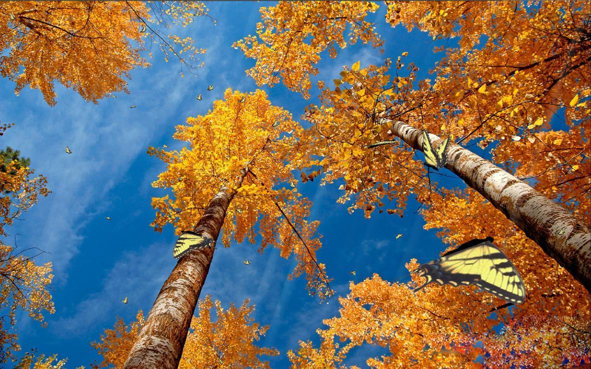 Screenshot of Colors Of Nature Screensaver 1.0