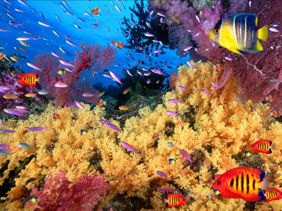 Download Coral Reef Aquarium Screensaver Torrent 1337x: aquarium free days