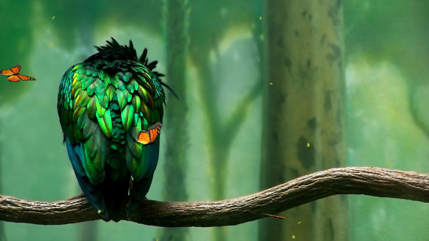 Green Bird Screensaver