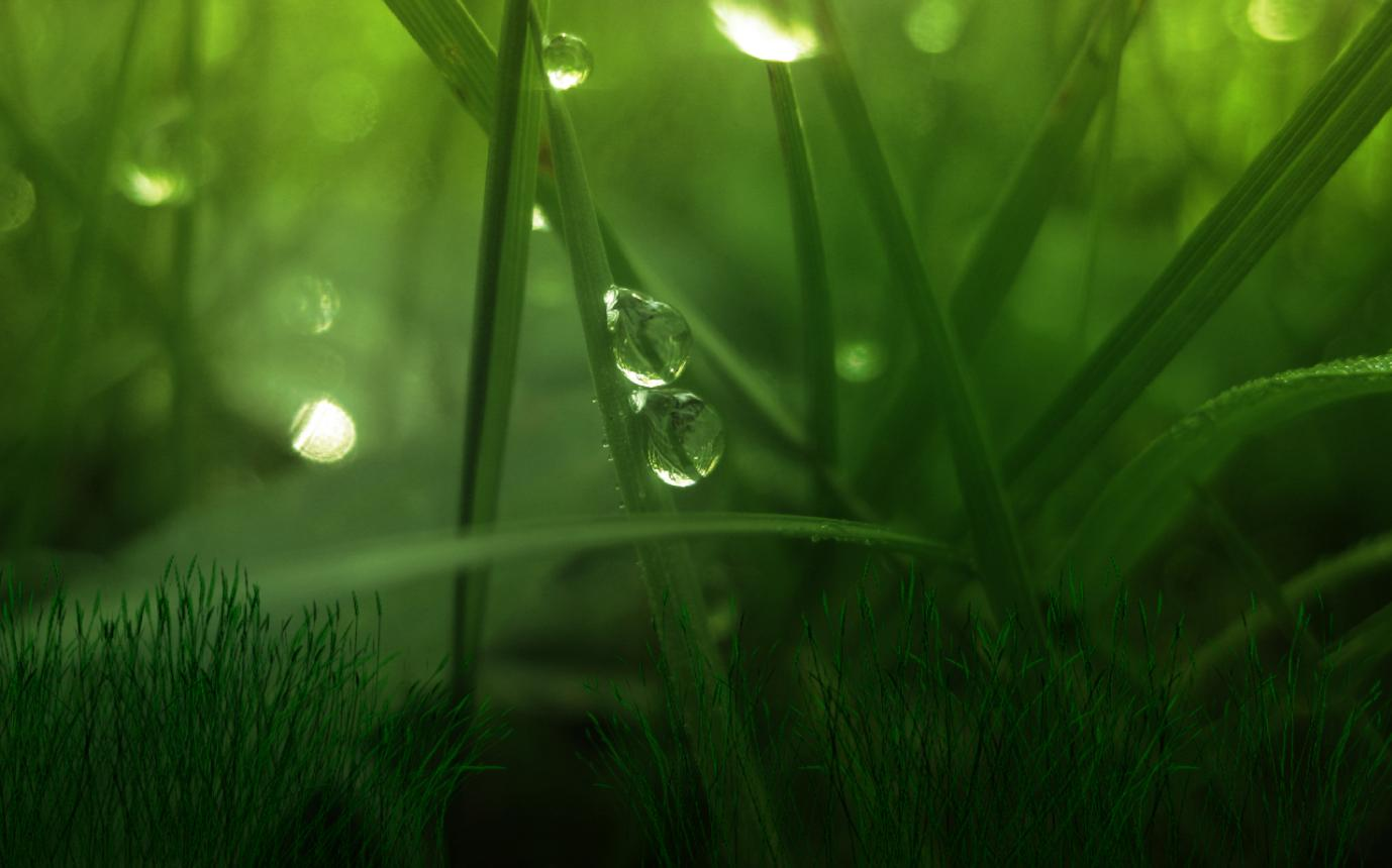 Green World Screensaver 1.0 full