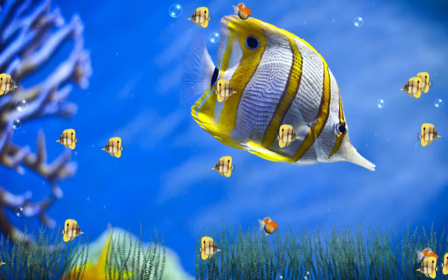 Marine Life Aquarium Screensaver Screen Shot