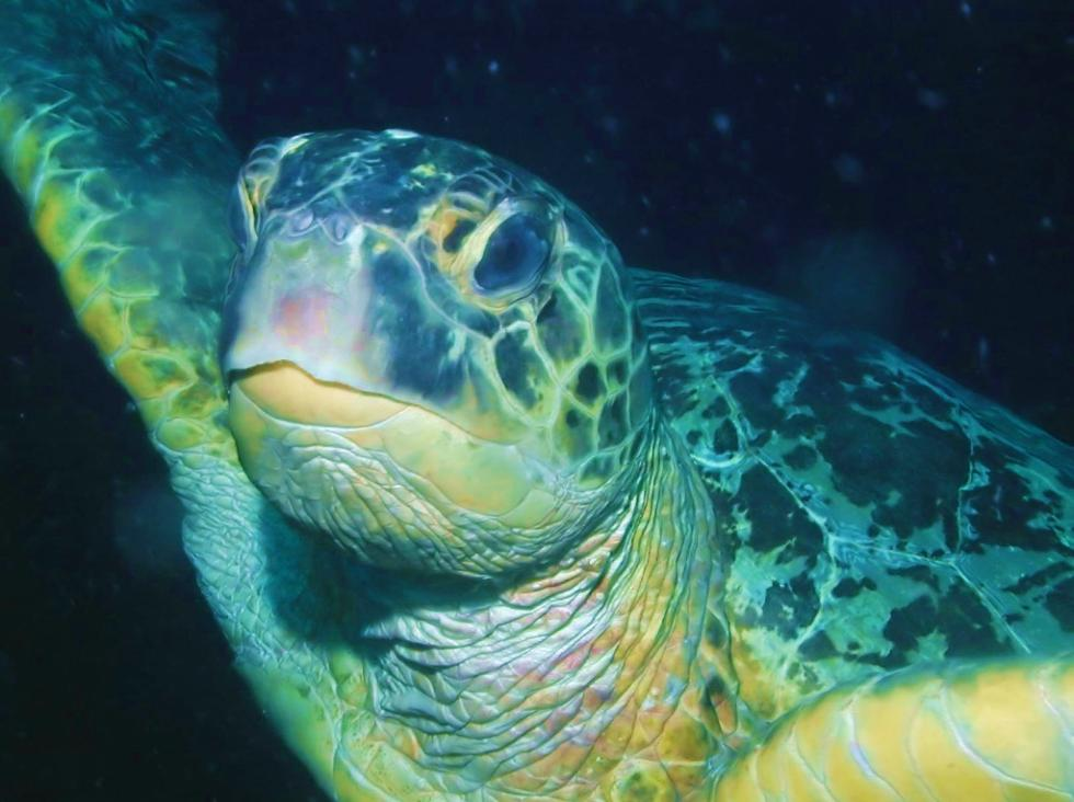 Download Sea Turtle Screensaver Torrent 1337x