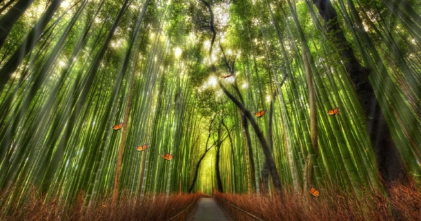 Beautiful Bamboo Forest Screensaver