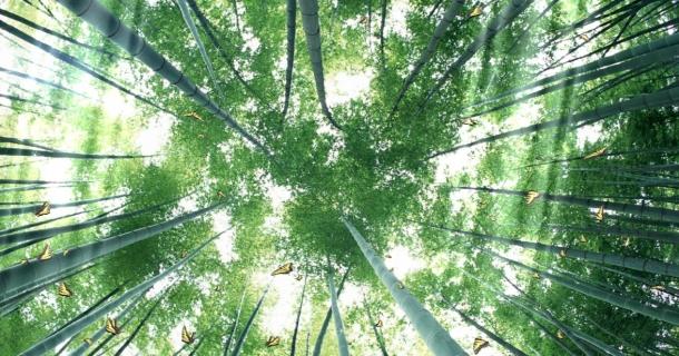 Beautiful Bamboo Forest Screensaver