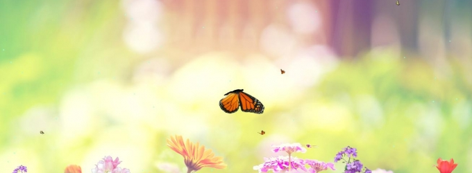 Butterfly Paradise Screensaver