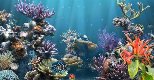 Coral Reef Aquarium Screensaver