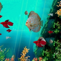 Coral Reef Aquarium 3D Screensaver