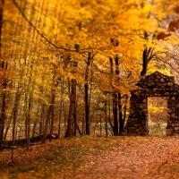 Golden Forest Screensaver