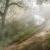 Light Forest Screensaver