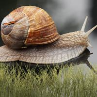 Mr Snail Screensaver