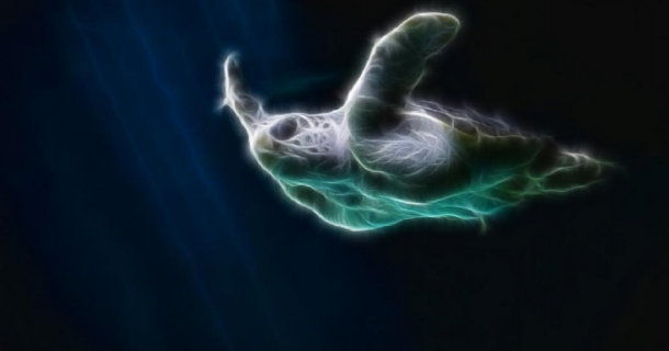 Sea Turtle Screensaver