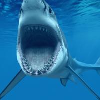 Shark Attack Screensaver