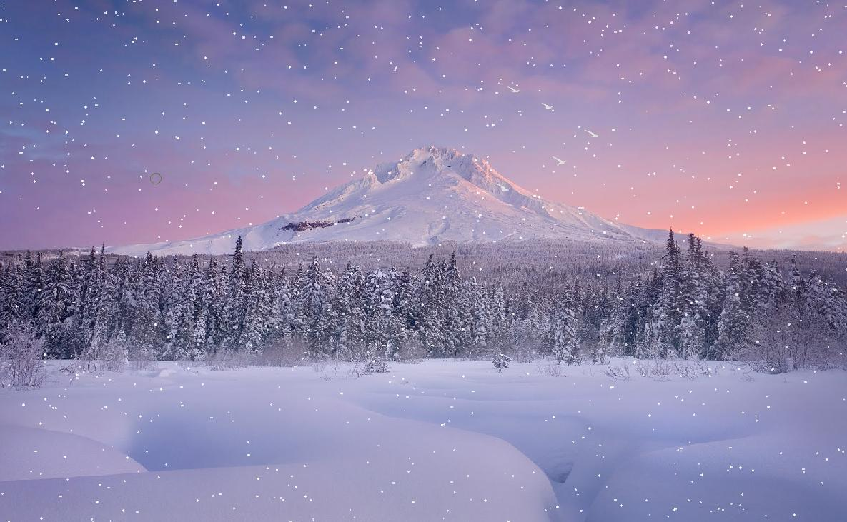 Snow Falling In The Forest Screensaver | The Best ...