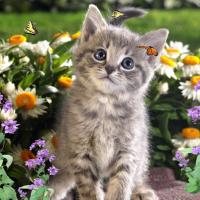 Sweet Kittens Screensaver