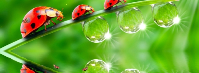 The Ladybug Screensaver