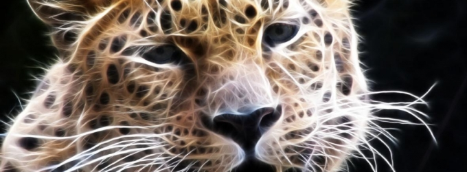 Wild Animal Screensaver